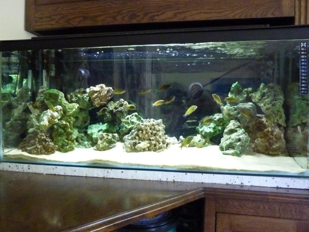 aquarium 100 litres