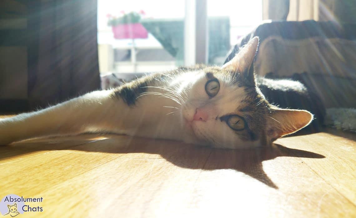 bruit pour chat