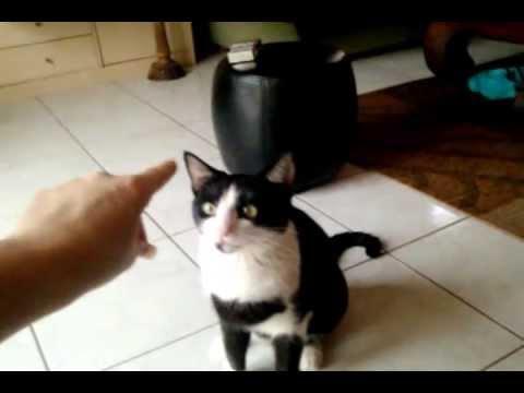 chat dressé
