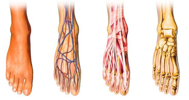 circulation sanguine pied