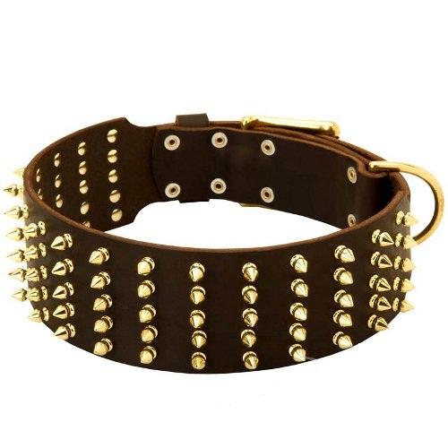 collier clouté pour chien