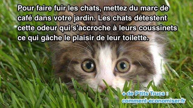 comment faire fuir un chat