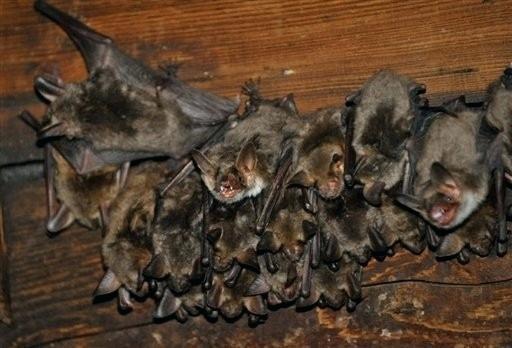 comment tuer des souris